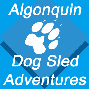 algonquin dog sled adventures