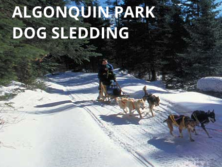 algonquin park dog sledding
