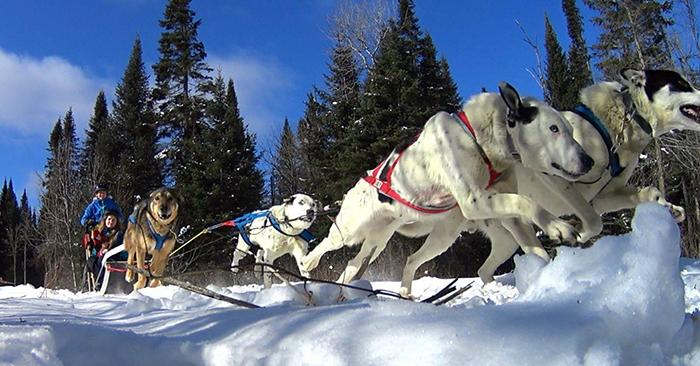 ontario dogsledding tours