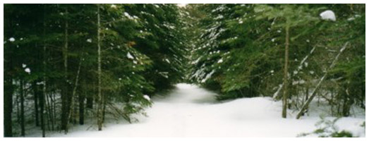 Algonquin Snowmobile Club Trail | Ontario Trails Council
