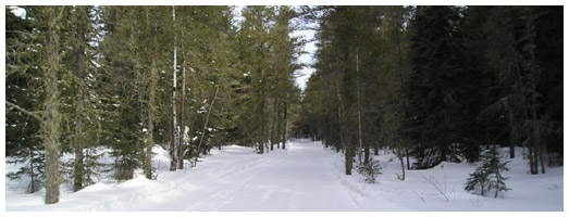Borderland Snowmobile Club Trail | Ontario Trails Council